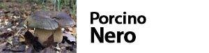 Boletus aereus, Porcinonero, Farno, Bronzino, Reale