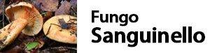 Lactarius deliciosus - Fungo Sanguinello
