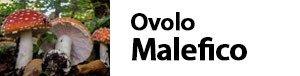 Amanita muscaria-Agaricus muscarius -ovolo malefico