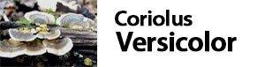 Coriolus versicolor - Trametes versicolor