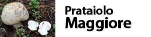 Agaricus arvensis - Prataiolo maggiore