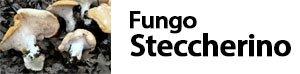 Hydnum repandum - Fungo Steccherino
