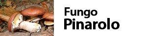 Suillus luteus - fungo pinarolo - boleto giallo