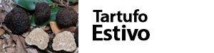 Tuber aestivum - Scorzone - tartufo nero estivo