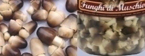 Volvariella volvacea - Fungo di muschio - fungo di fieno