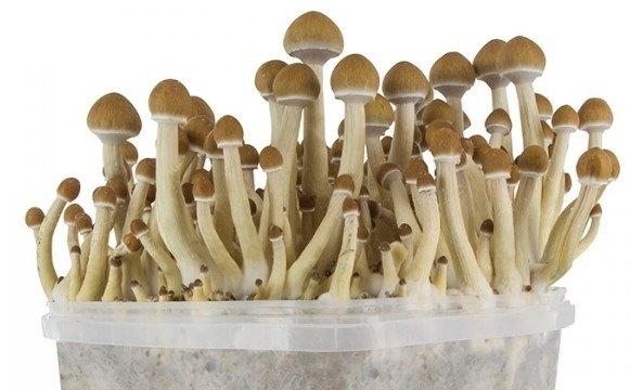 balle per funghi